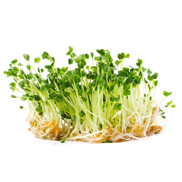 5 Reasons Why You Should be Eating Sprouts