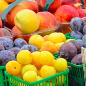 Farmer's Market Shopping Guide