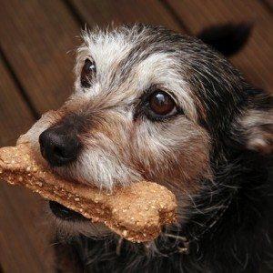 Healthy Homemade Dog Treat Recipe