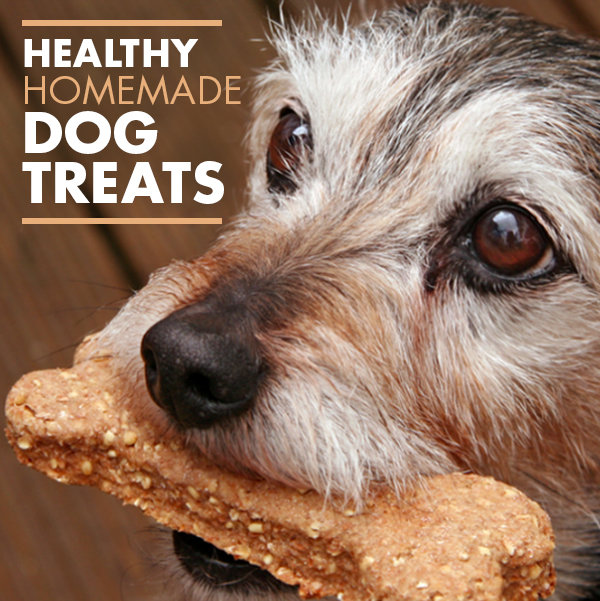Healthy Homemade Dog Treat Recipe