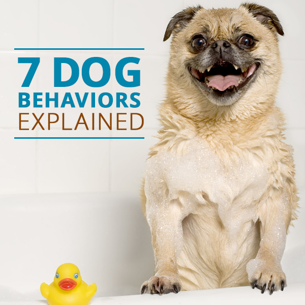 7 Dog Behaviors And How To Handle Them