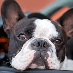 7 Tips for Traveling with Your Pets