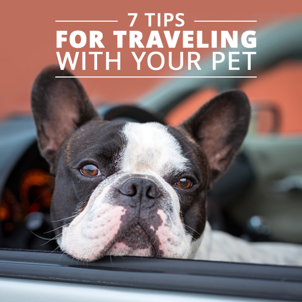 7-Tips-for-Traveling-with-Your-Pet