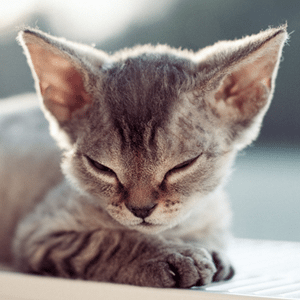 10 Pets For Those Who Suffer From Allergies