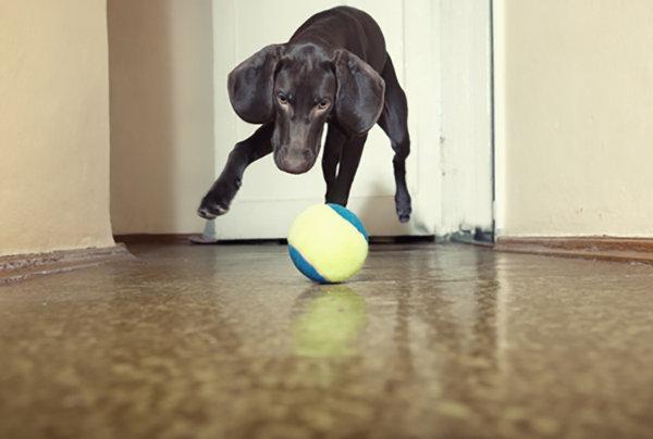 5 DIY Dog Puzzle Games