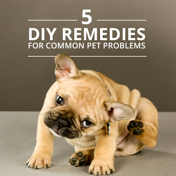 5-DIY-Remedies-for-Common-Pet-Problems
