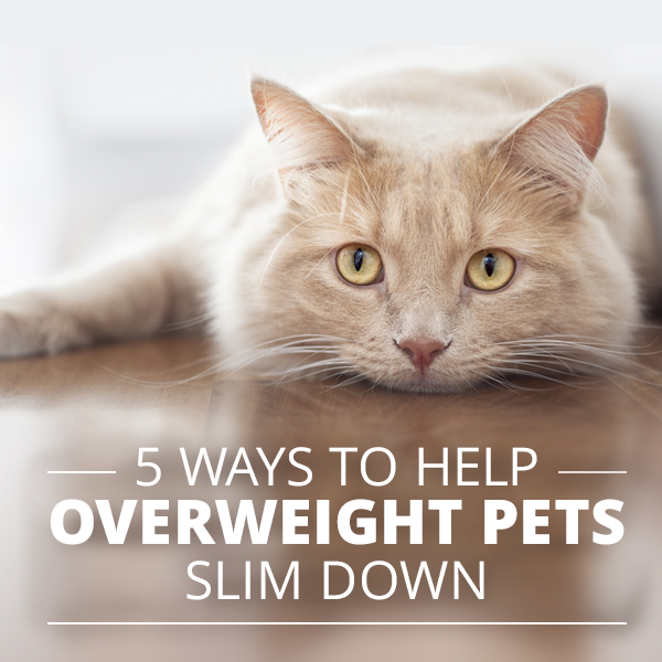 5 Tips to Help Your Overweight Pet Slim Down