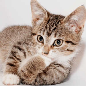 7 Cat Behaviors and What They Mean
