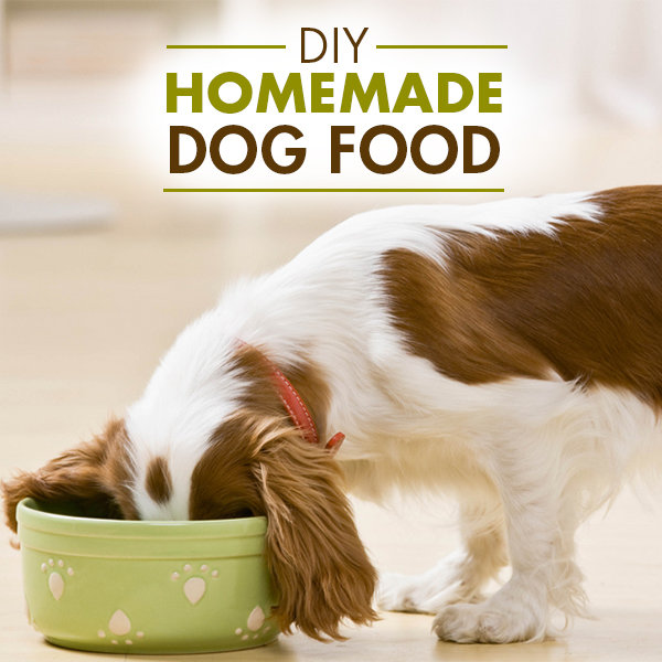 Homemade Dog Food For Protein Allergies
