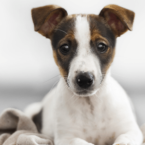 A New Leash on Life: Stem Cell Therapy for Dogs