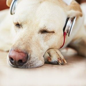 Relaxing Music for Dogs and Cats