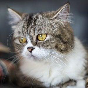 Wet or Dry Nose? – Understanding Your Cats Health