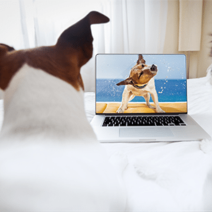 5 Top Pet Videos of 2014
