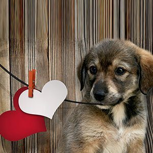 6 Valentine's Day Gifts for Your Dog