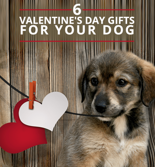 6-Valentine's-Day-Gifts-for-Your-Dog