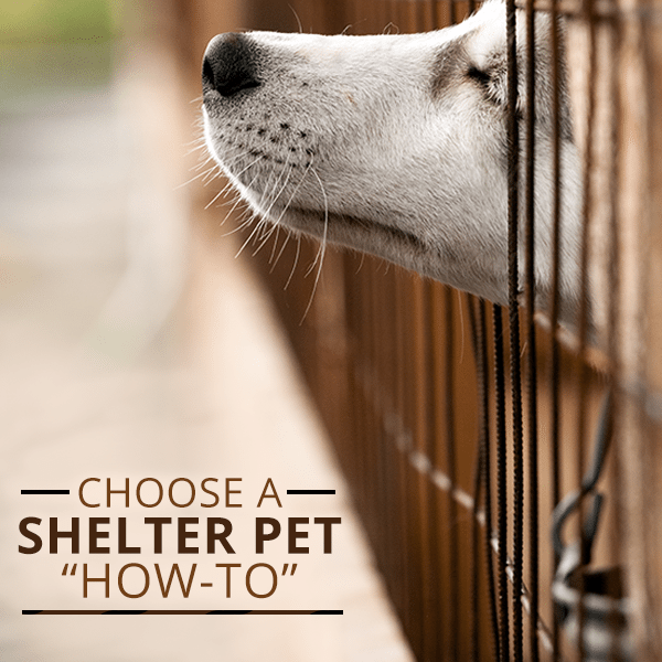 How-to-Choose-a-Shelter-Pet