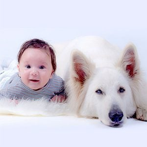 6 Steps to Introduce Your Dog and New Baby