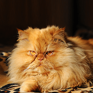 10 Cats Who Are Totally Over It