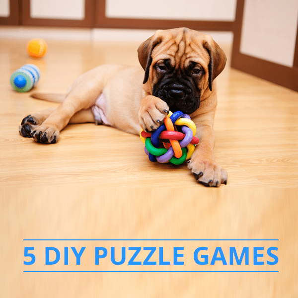 5 diy dog puzzle games 5 diy dog puzzle games solutioingenieria Images