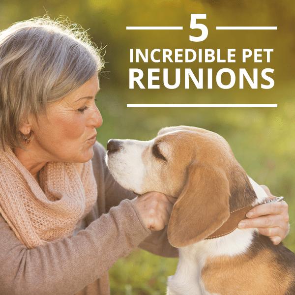 5-Incredible-Pet-Reunions