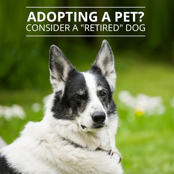 Adopting-a-Pet--Consider-a-'Retired'-Dog