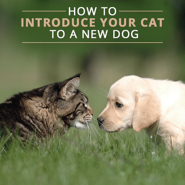 How-to-Introduce-Your-Cat-to-a-New-Dog