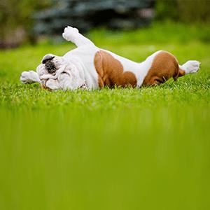Weird Pet Behaviors: Decoded