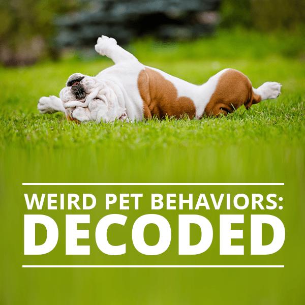 Weird-Pet-Behaviors--Decoded