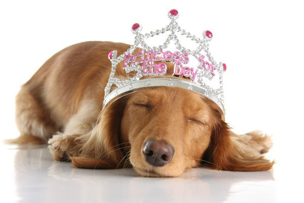 Your Dog Might Be Spoiled Rotten If…