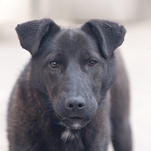 4 Types of Pets That Need Adopting