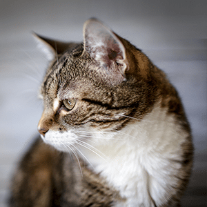 7 Baking Soda Uses for Your Pet