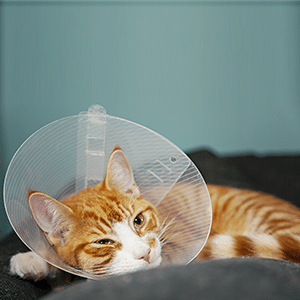 7 Things You Should Know About Spaying & Neutering