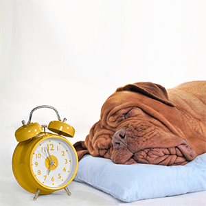 Adjusting Your Pet to Daylight Saving Time