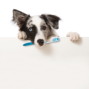 DIY Doggie Toothpaste