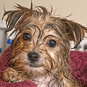 DIY Pet Shampoo