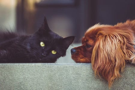 How To Introduce Your Cat to a New Dog