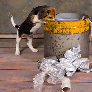 A Fool-Proof Guide for Puppy Proofing Your Home