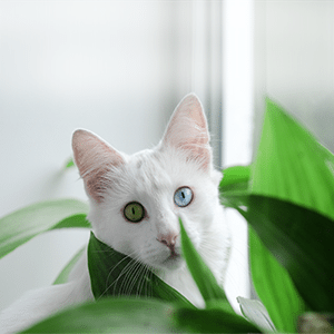 10 Common House Plants That Are Toxic to Cats
