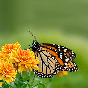 10 Crazy Facts You Never Knew About Butterflies