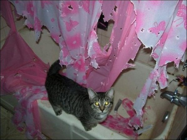 11 Pets Caught in the Act 009