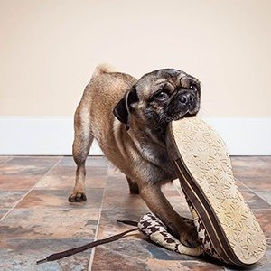 11 Pets Caught in the Act