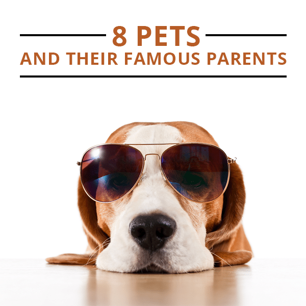 8-Pets-and-Their-Famous-Parents-