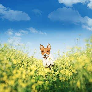 8 Ways to Welcome Spring With Your Dog