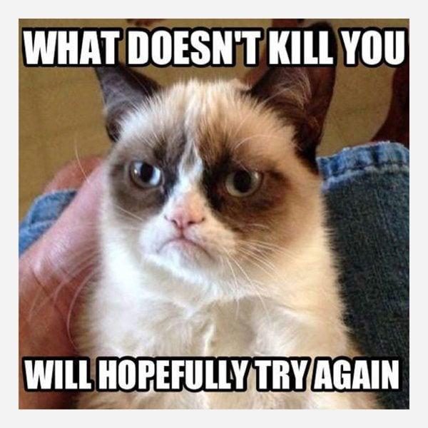 9 Best Grumpy Cat Memes 2
