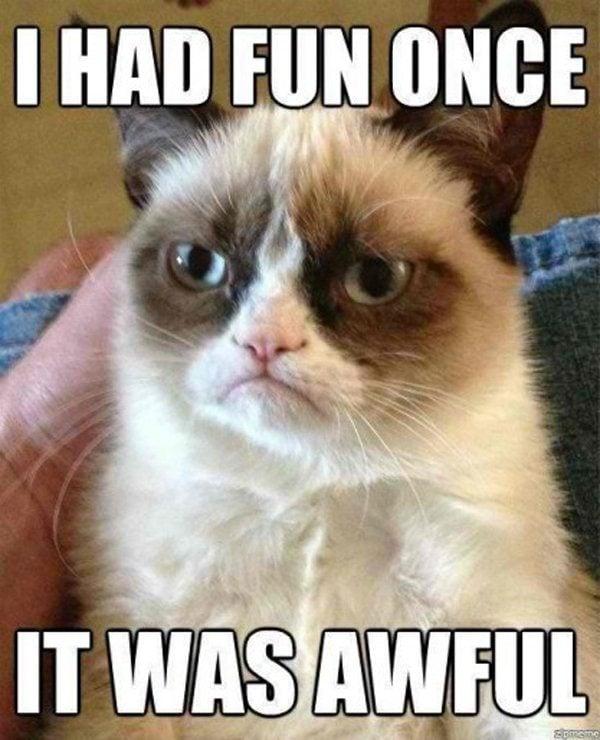 9 Best Grumpy Cat Memes 6