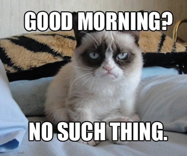 9 Best Grumpy Cat Memes 7