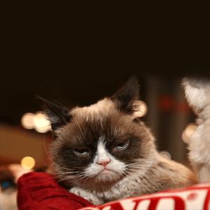 9 Best Grumpy Cat Memes