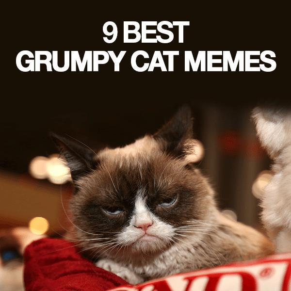 9-Best-Grumpy-Cat-Memes