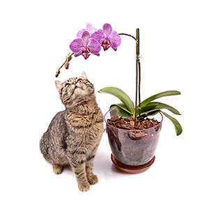 9 Non-Toxic House Plants for Cat Parents