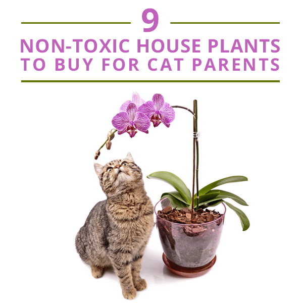 9 non toxic house plants for cat parents Houseplants not toxic to cats